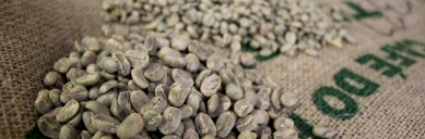 Drury Tea & Coffee - Raw Coffees
